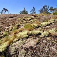 Королевство мхов и лишайников  на скале :: Елена (ЛенаРа)