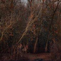 в лесу :: Владимир Суязов