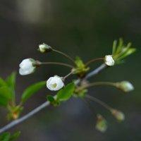 Весна.... , нежность ... !!! ;) :: Вен Гъновски