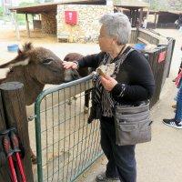 Милый и ласковый ослик! :: Герович Лилия