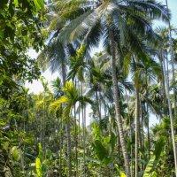 тропический лес :: Георгий А