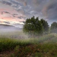 Мокрая трава ложилась туманом :: Лара Симонова