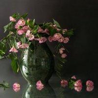 вьюнок-летний цветок... :: шмакова тамара