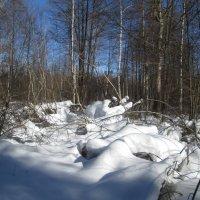 В лесу :: Антон Завьялов