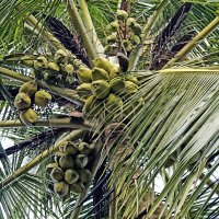 Жуй кокосы, ешь бананы... :: Alex
