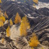 Осенняя красота Кондуков :: Светлана Карнаух