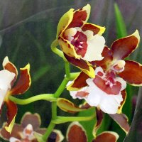 Песнь прекрасной орхидее... Почти акварель ) :: Тамара Бедай