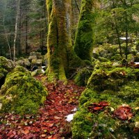 МOXнатый лес :: Elena Wymann