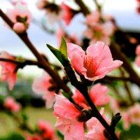 цветы :: Алтынбек Картабай