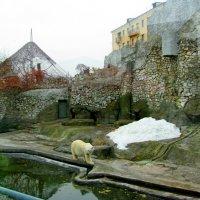 МОСКВА, зоопарк. :: Виктор Осипчук