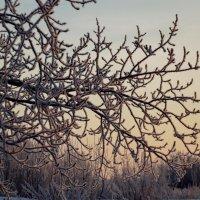 Хрустальная зима на рассвете :: Светлана Рябова-Шатунова