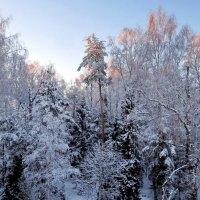 Апрельское утро в моем лесу :: Марина Морозова
