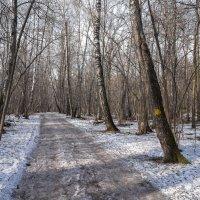 В апрельском лесу :: Владимир Жданов