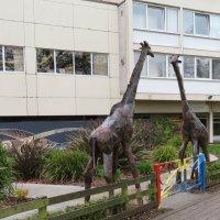 Скульптура жирафов :: Natalia Harries