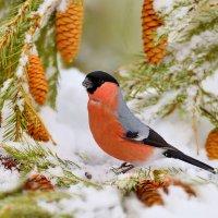 В зимнем лесу :: Влад