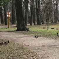 В весеннем парке. :: ТАТЬЯНА (tatik)