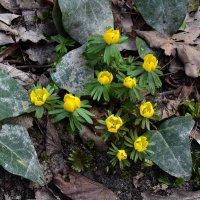 Первые цветы :: dindin