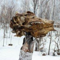 Про ужасы нашего весеннего леса... :-) :: Андрей Заломленков