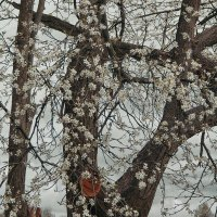 Весна идет.... :: Владимир Матва