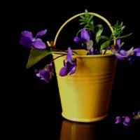 Такая маленькая весна... :: ЛЮБОВЬ ВИТТ