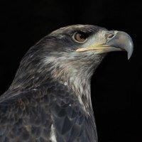 Portrait of bird :: Владимир Шадрин