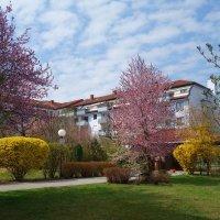 Весна в городе Аугсбург, Бавария... :: Galina Dzubina