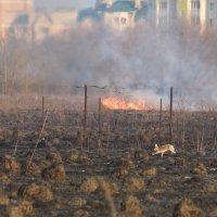 В огне не сгорел! :: Иван Сурков