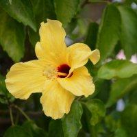 Цветок в Серембане :: Karlygash Khassenova