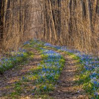 Дорога в сказочный лес. :: ALEXANDR L