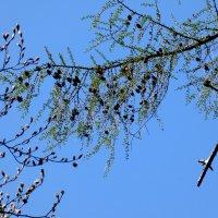 Весна прибыла :: Heinz Thorns