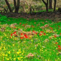 Весна. :: Alex FA