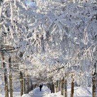 Зимнний наряд :: Владимир