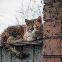 Балдеющее котище) :: Алексей Кузьмичев
