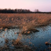 Закат в апрельских камышах... :: Нэля Лысенко