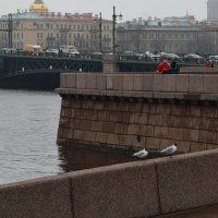 Петербург :: Ирина Рачкова