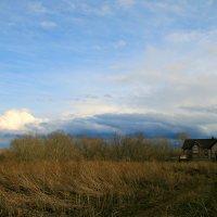 В небо тянулись зимой утомленные тонкие ветки, жизнью влекомые... :: Евгений Юрков