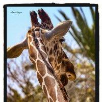 Жираф большой ему видней... :: Shmual & Vika Retro