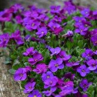 Весенние цветы :: Lyudmyla Pokryshen