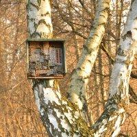 отель для насекомых :: Alexander K