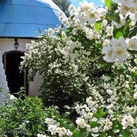 Пора цветения :: Евгений Кочуров