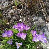 весна :: Елена Иванкина