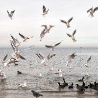 Птицы... :: Анастасия Богатова