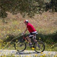 Велосипедист :: Ефим Журбин