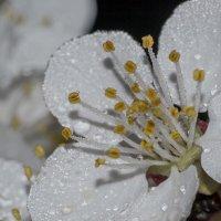 Весна :: Alex G.