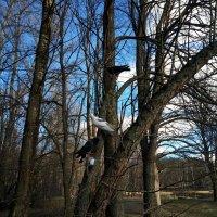 Голуби на дереве :: Елена Павлова (Смолова)