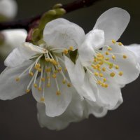 Огоньки Весны :: Валерий Басыров