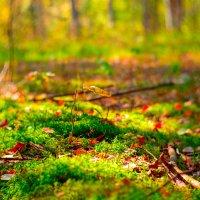 Осенний одинокий лист :: Илья