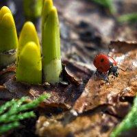 На встречу к весне! :: Маргарита Си