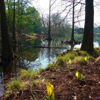 Весна в парке :: Nina Yudicheva
