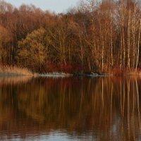 Апрель. Отражение весны в зеркале пруда... :: Ольга Русанова (olg-rusanowa2010)